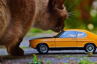 cat and car